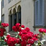 Fioritura di rose a Villa Lazzareschi